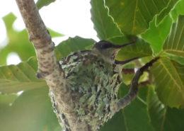 Hummingbird's Spirit
