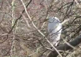 Hidden egrets