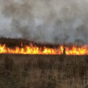 controlled burn