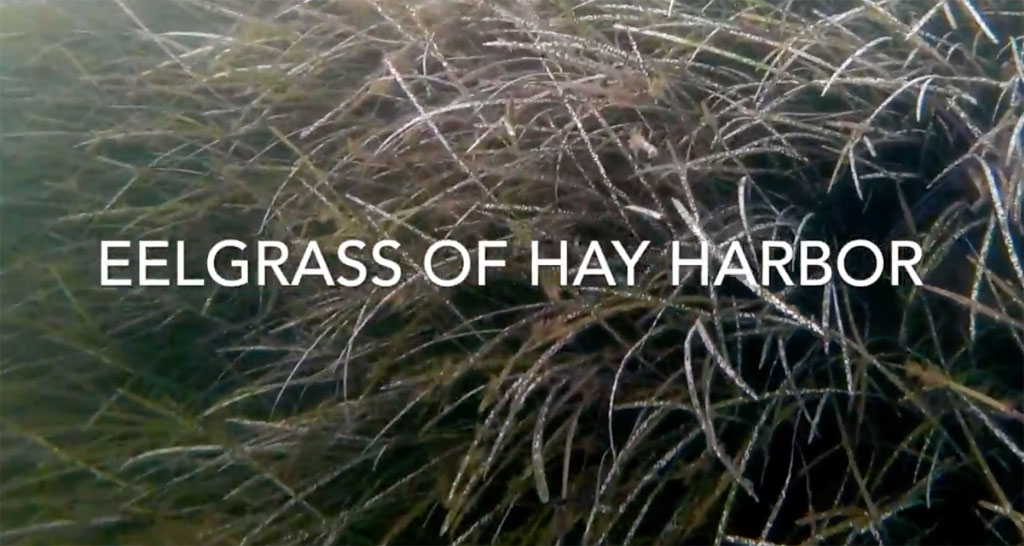 seagrass video