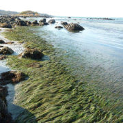 Healthy Seagrass Meadows by Justine Kibbe
