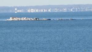 East Harbor Seals